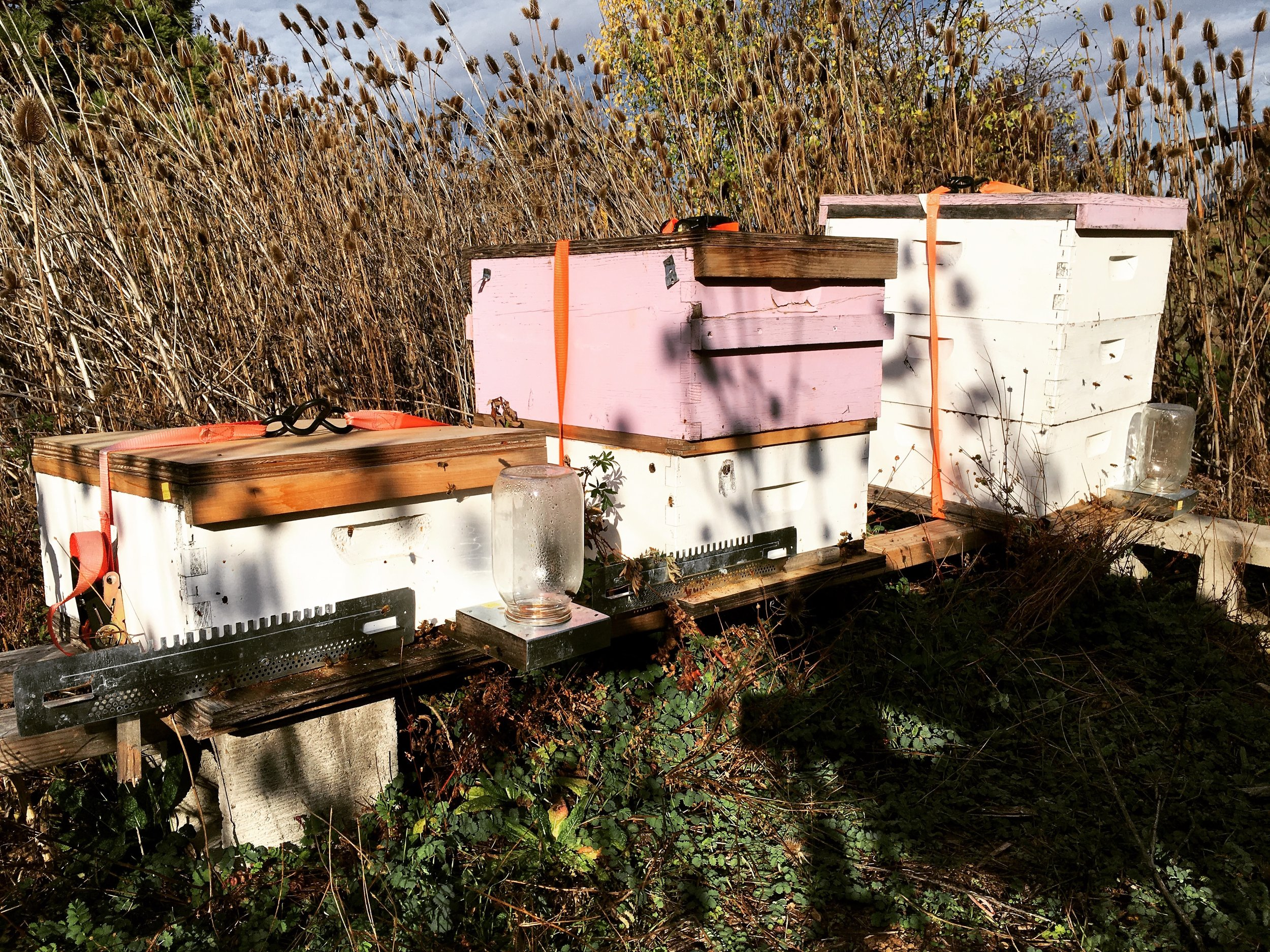 Our Hives.