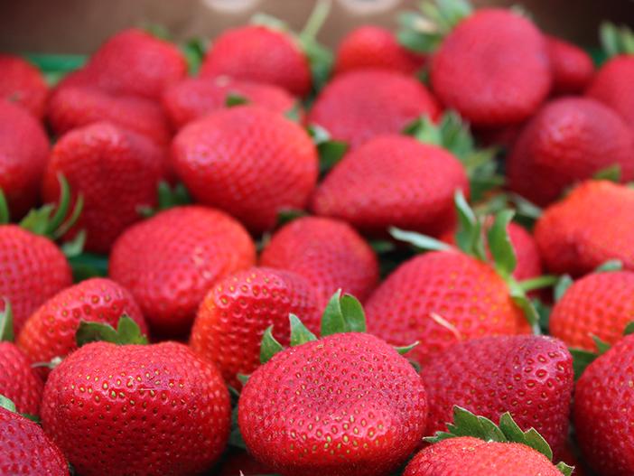 SquarespaceImage19-Strawberry02.jpg
