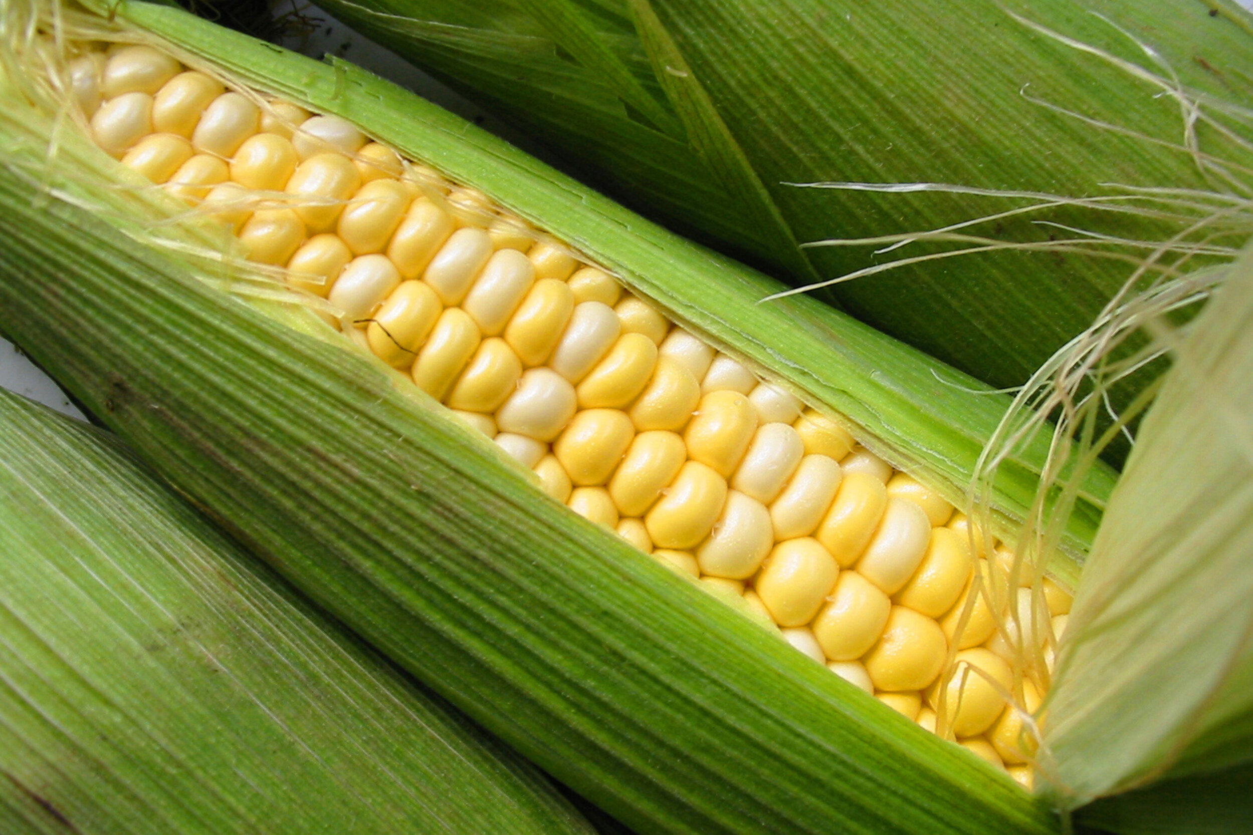 SquarespaceImage19-Corn-SweetCorn.jpg