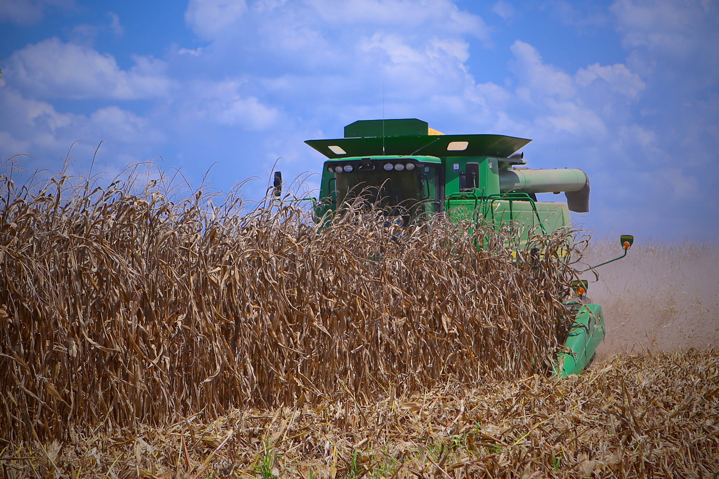 SquarespaceImage19-Corn-harvest.jpg