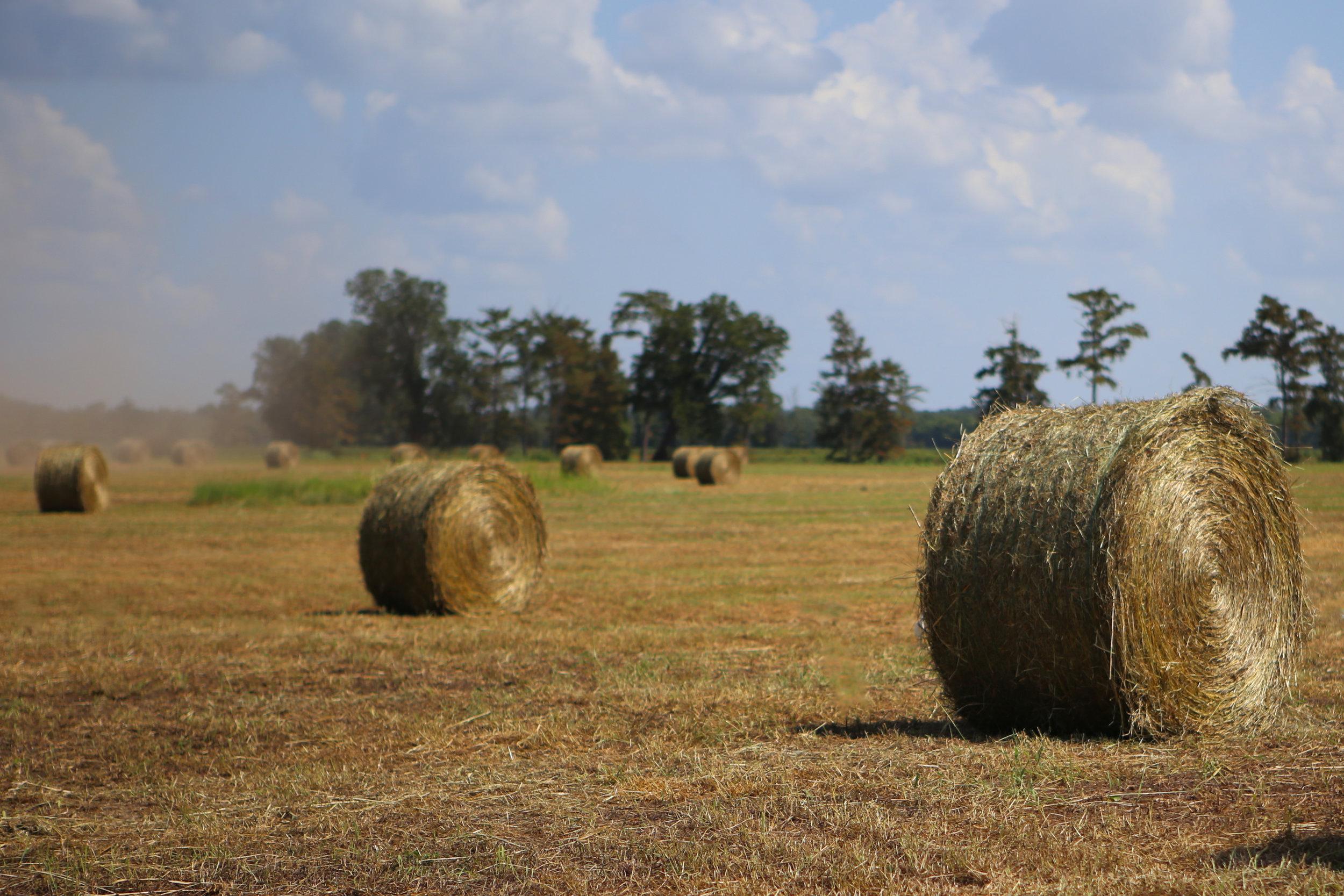 SquarespaceImage19-hay-roundbales.jpg