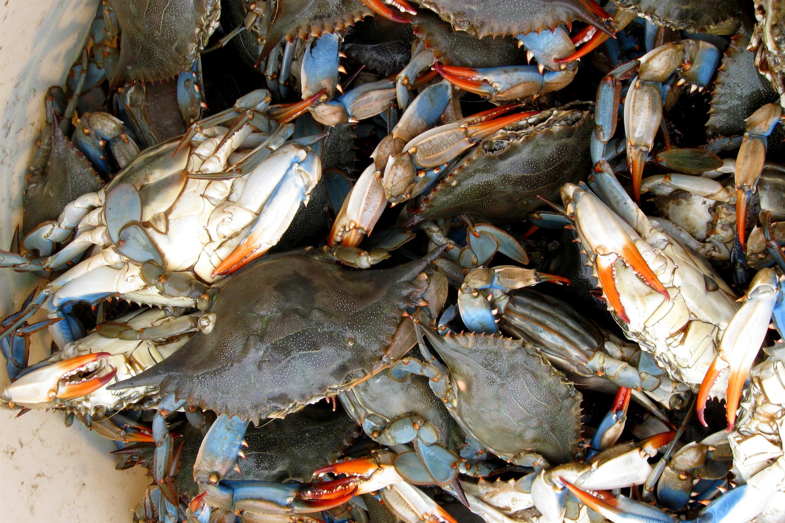 SquarespaceImage19-marinefisheries-crabbucket.jpg