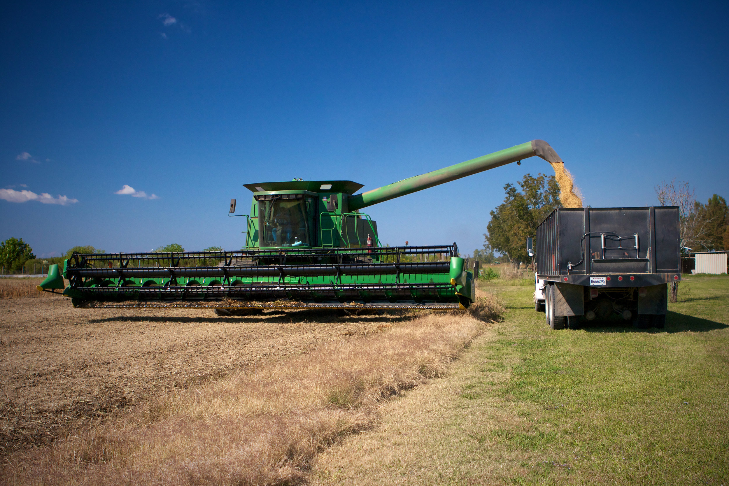 SquarespaceImage19-soybeans-unloading.jpg