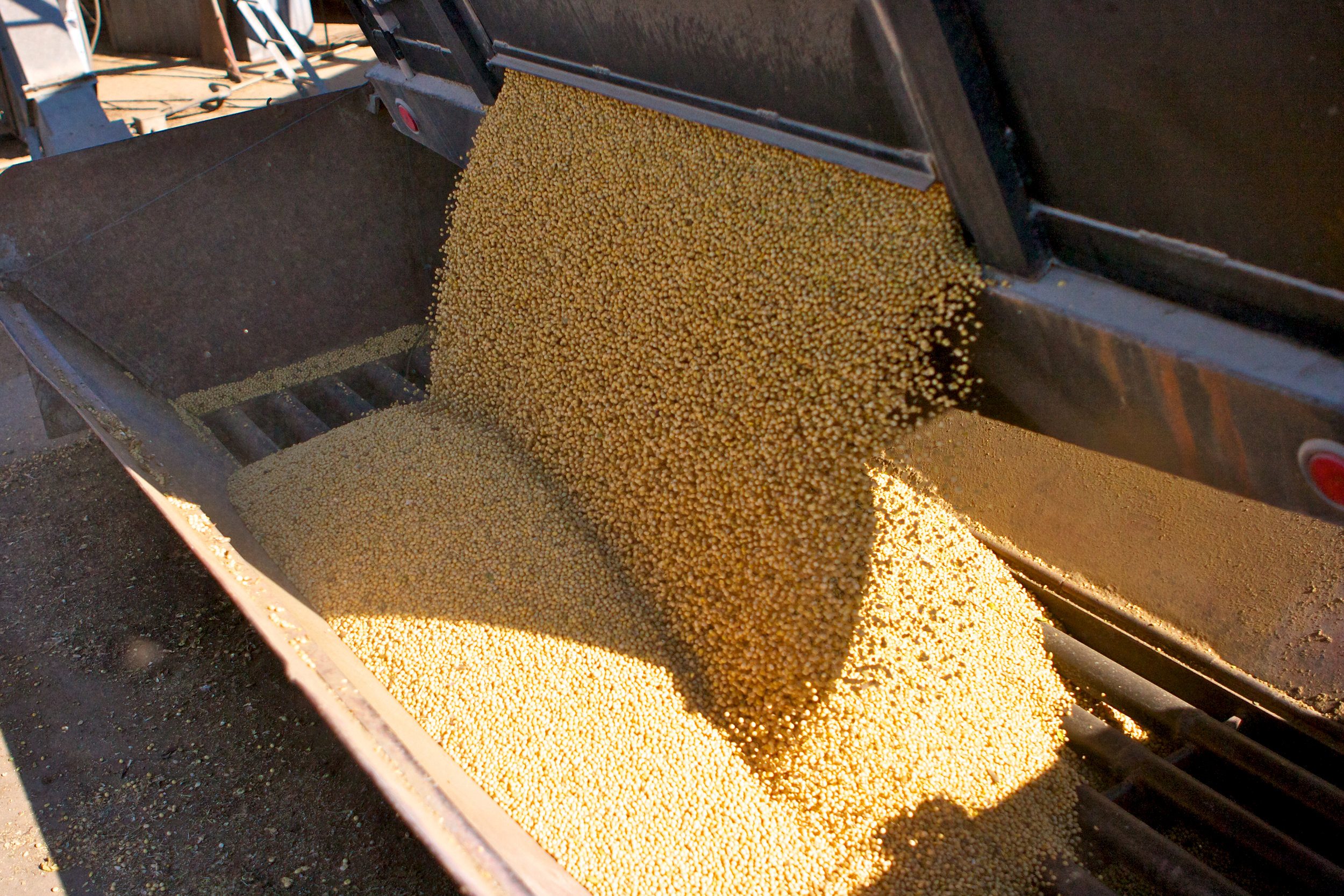 SquarespaceImage19-soybeans-unloadingbeans.jpg