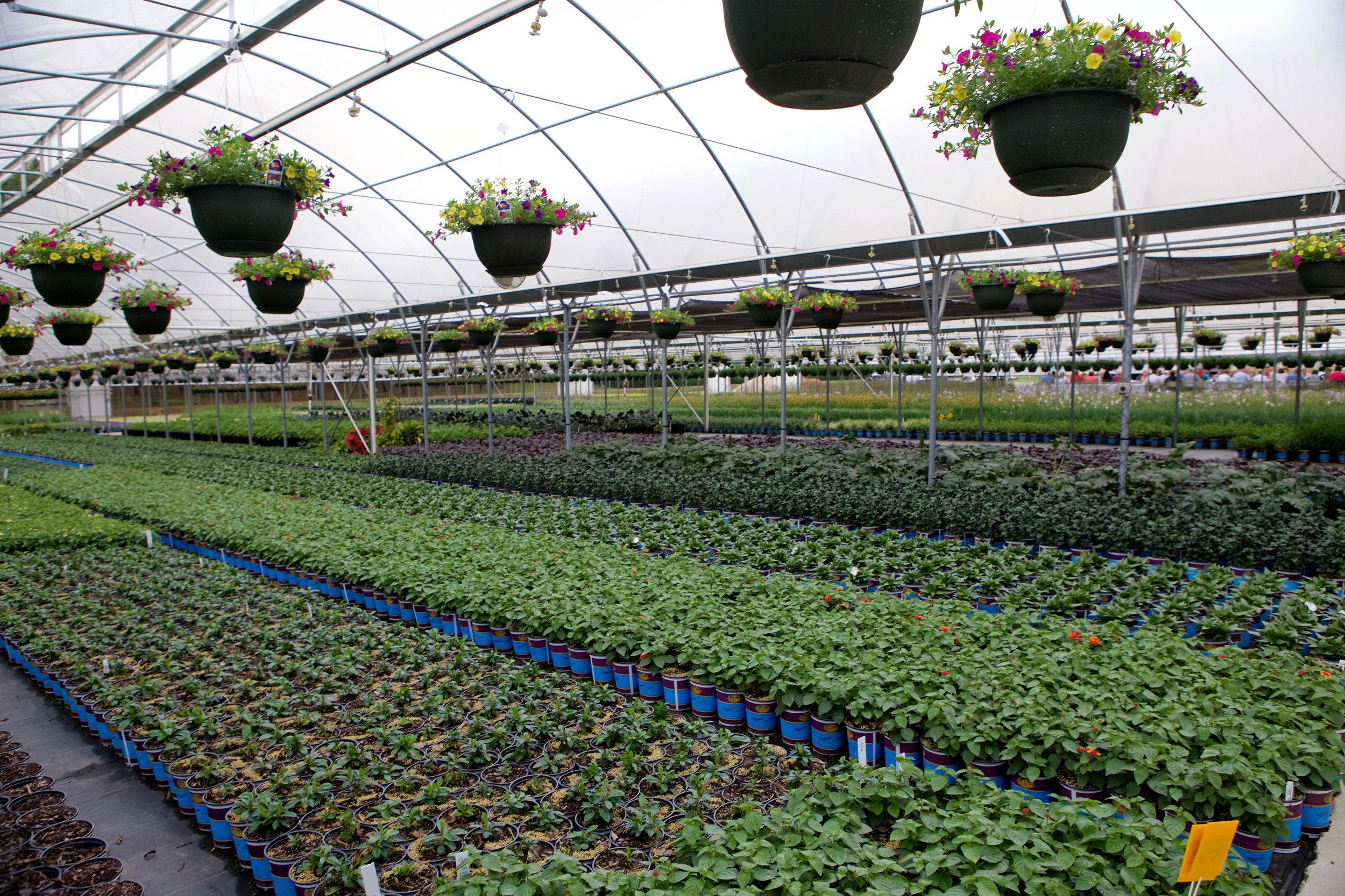 SquarespaceImage19-nursery-greenhouse.jpg