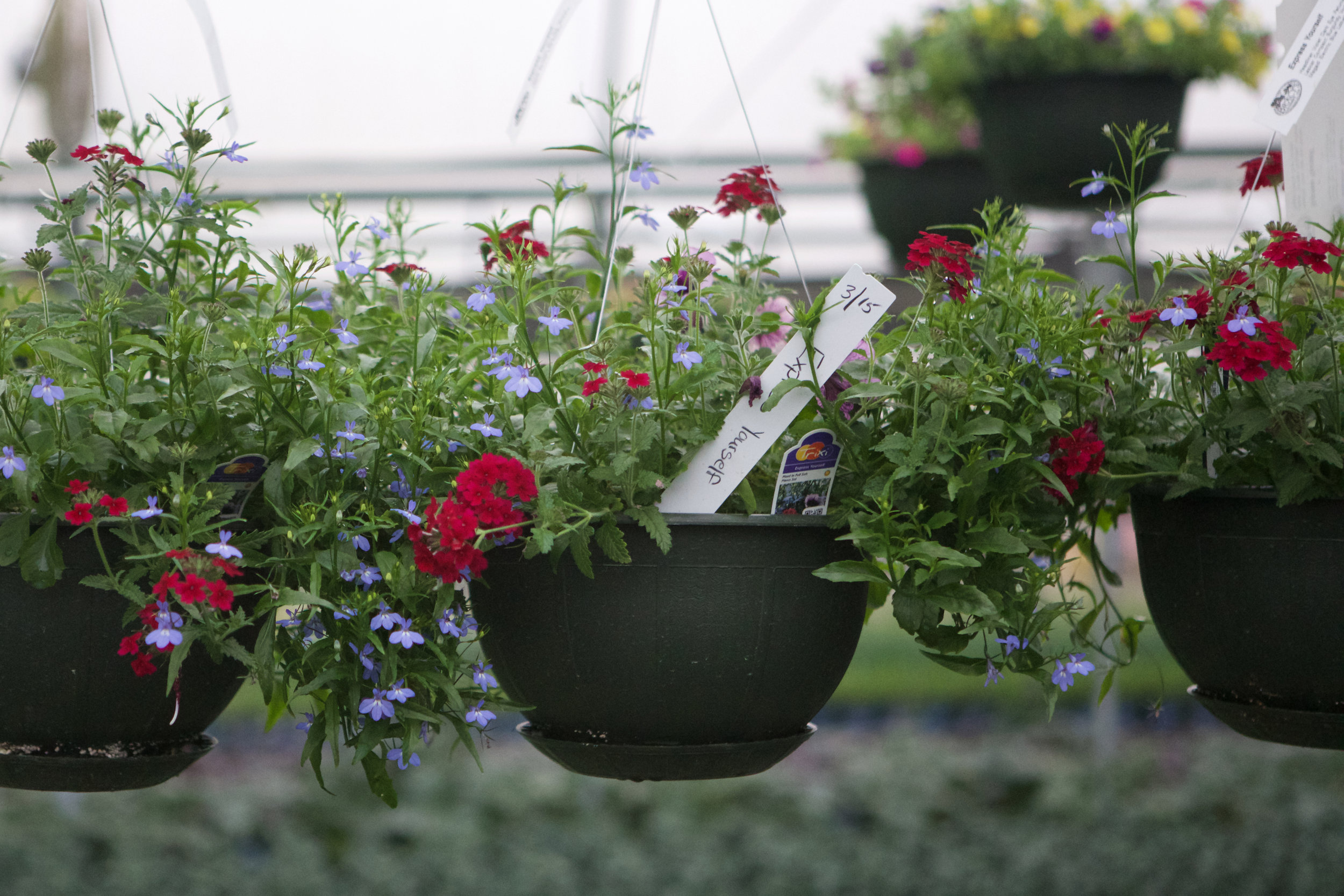 SquarespaceImage19-nursery-pottedplant.jpg