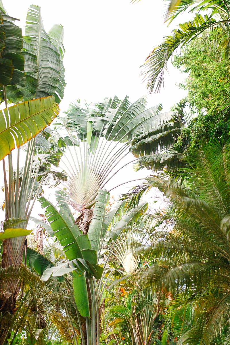 jamaica2-1.jpg