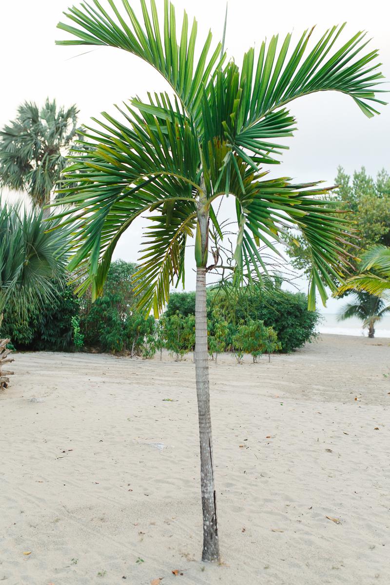 jamaica3-1.jpg