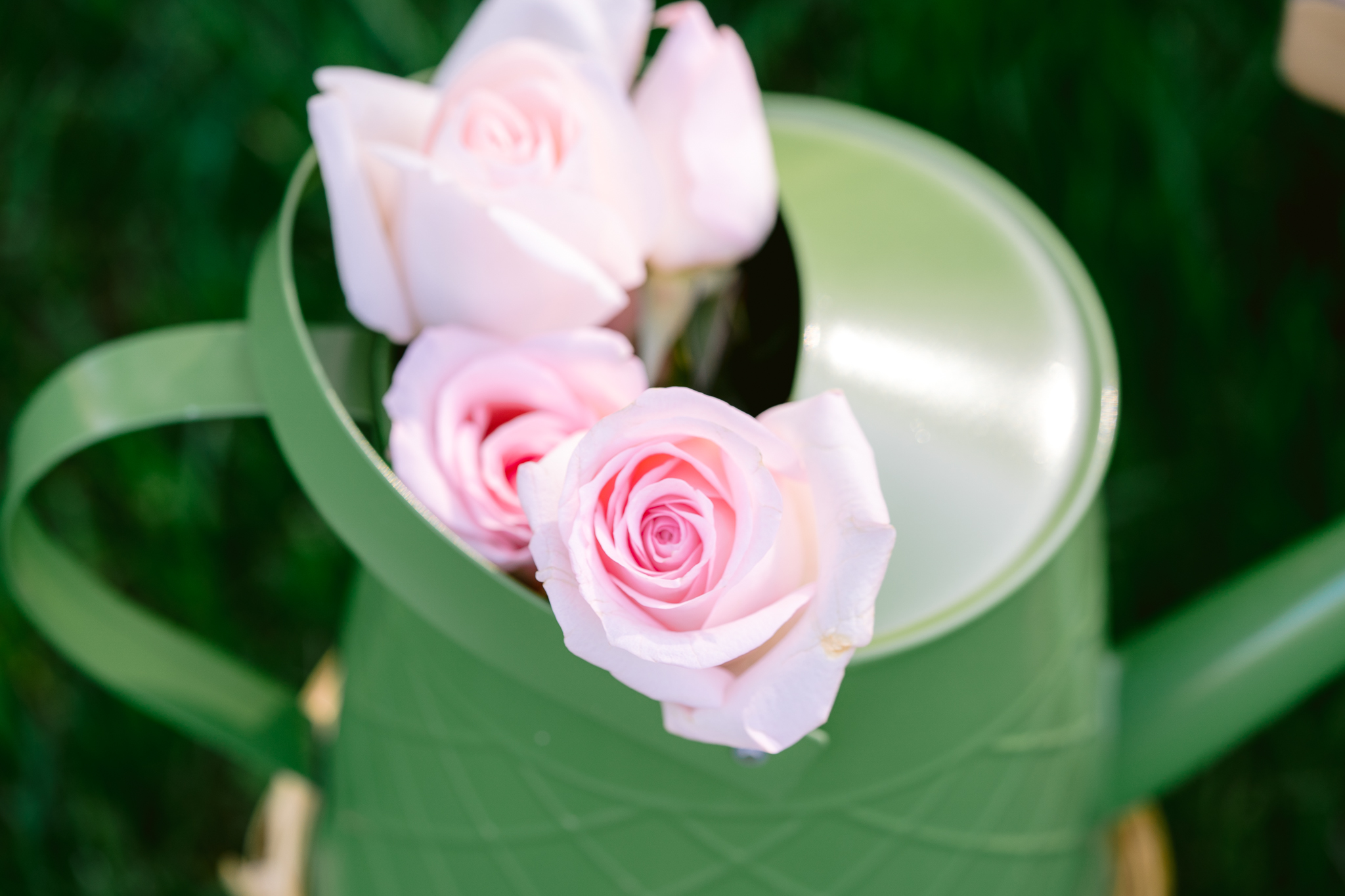 Can of roses, flowers