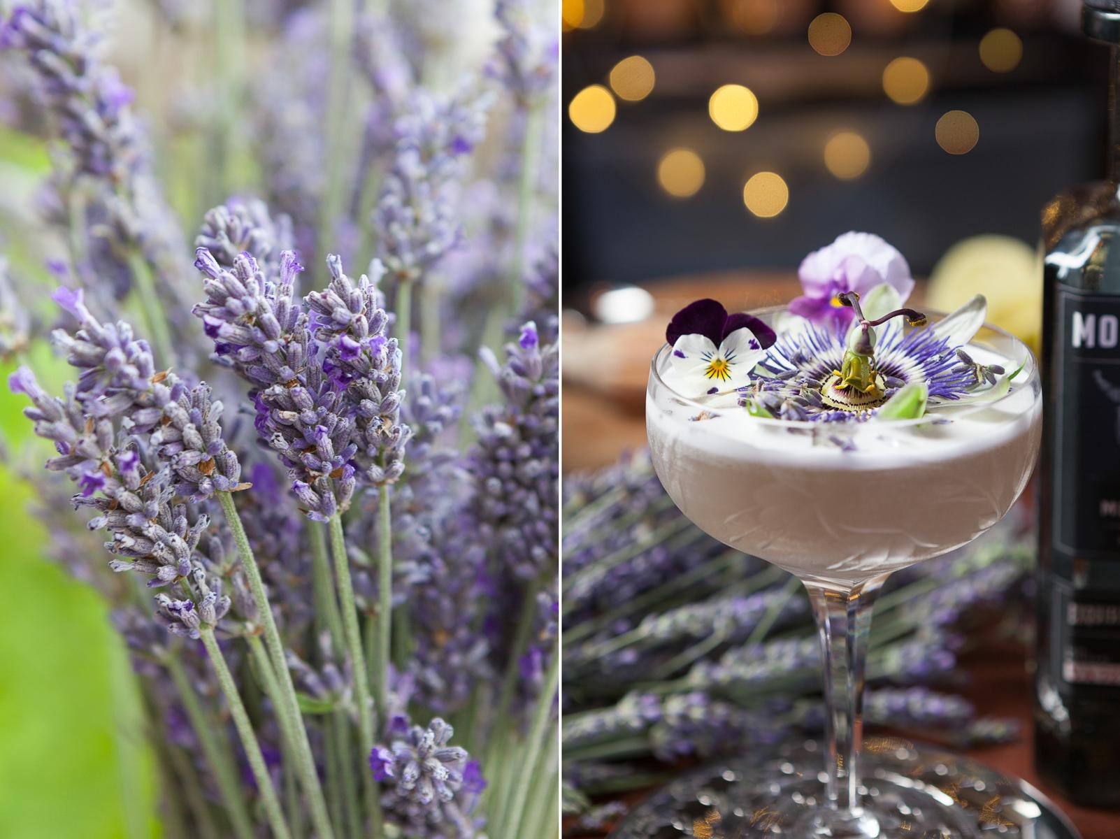 Hikaru Funnell - Back Yard Cocktails -Egg White Sour.jpg