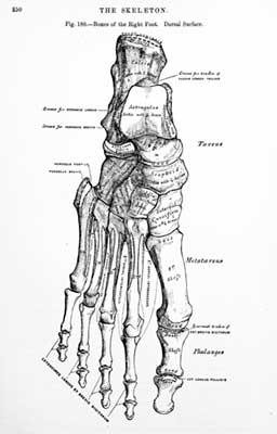 foot-diagram.jpg