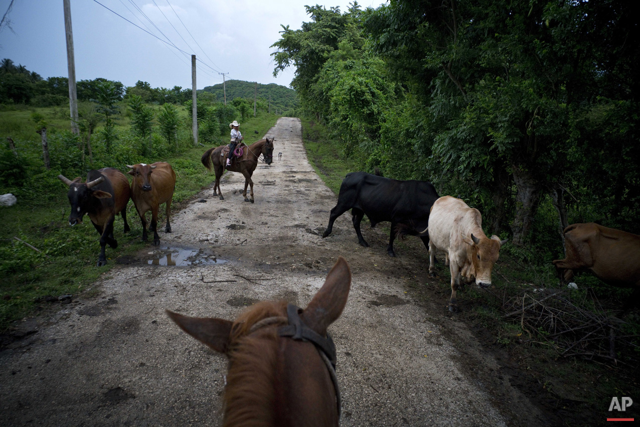 In this July 29, 2016 photo, cowgirl Dariadna Corujo sits on her horse while herding cattle near a farm in Sancti Spiritus, central Cuba. At the tender age of 6, Dariadna is already an expert barrel racer and calf roper, wearing pink boots as she competes in rodeos on the flat grasslands of central Sancti Spiritus province. (AP Photo/Ramon Espinosa)