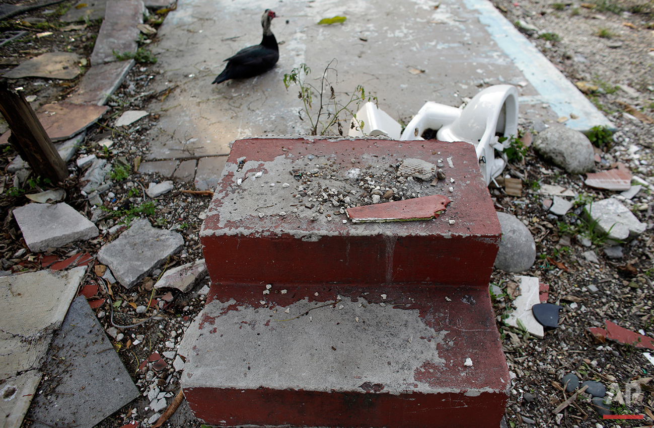 In this Monday, June 13, 2016 photo, a duck sits near a discarded toilet and steps at the Little Farm trailer park in El Portal, Fla. Residents, many of whom had owned their mobile homes in this close-knit community for years, were evicted in July after the park was purchased in 2015 by Wealthy Delight LLC. The site is now in preliminary planning for mixed use development. (AP Photo/Lynne Sladky)See these photos on  APImages.com