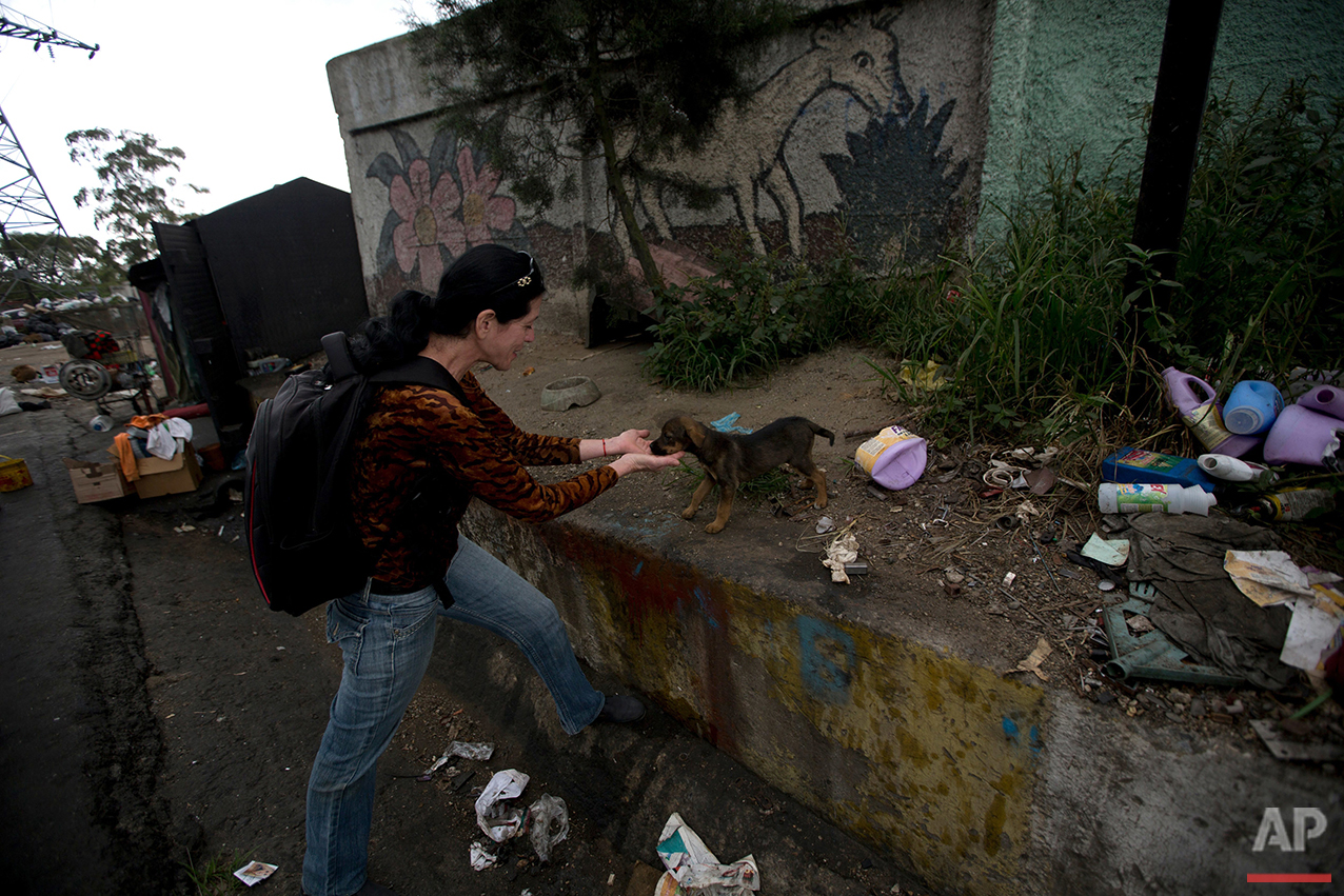 In this July 23, 2016 photo, Katty Quintas, part owner of the Funasissi animal shelter, comes across an abandoned dog rummaging in the trash in the working-class Caracas neighborhood of El Junquito, Venezuela. In Caracas it has become common to see purebred dogs rummaging in the trash or lying outdoors, filthy and gaunt. (AP Photo/Fernando Llano) See these photos on  APImages.com