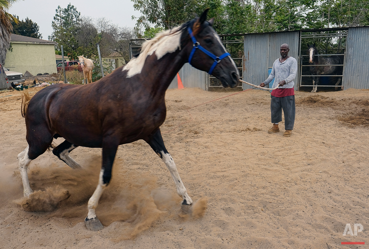 """Ivory McCloud exercises one of his horses at his stable in the backyard of a home in Compton, Calif., on Sunday, Aug. 7, 2016. """"I've got 40 years in this, man,"""" the 56-year-old horseman says. """"My dad was a cowboy. I'm a cowboy. I grew up in Compton. I live in Compton and I've been training horses since I was a kid."""" (AP Photo/Richard Vogel)"""