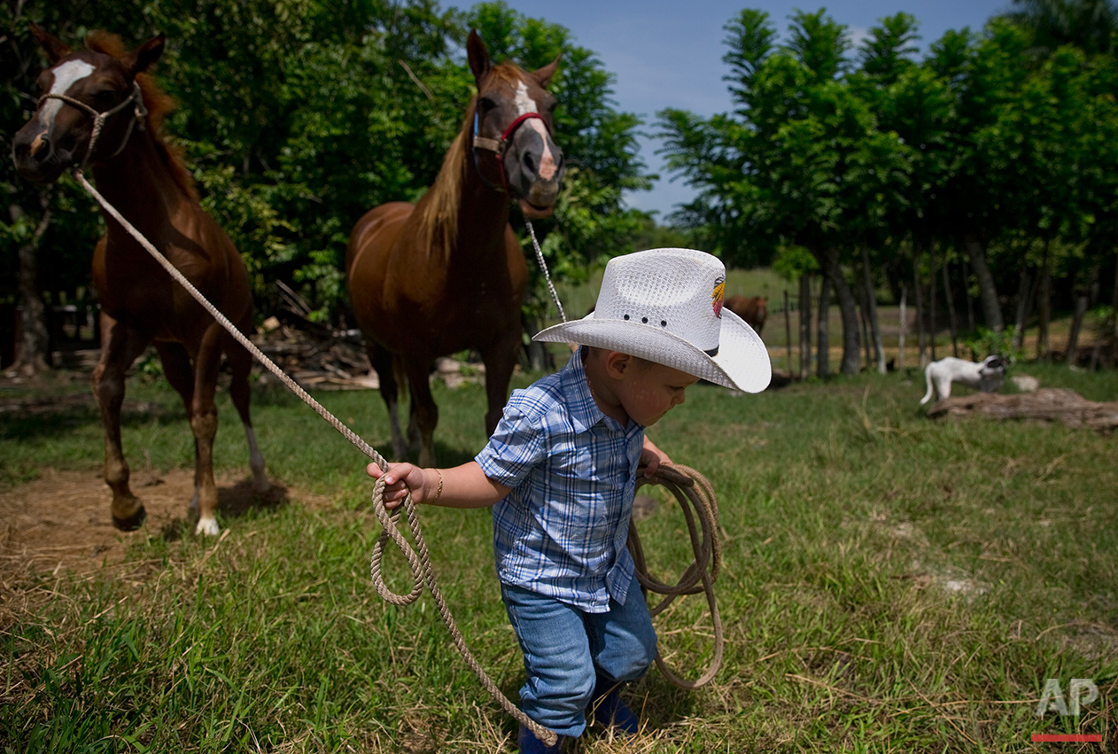 In this July 29, 2016 photo, 2-year-old cowboy Wrangler Ponce pulls two horses at his parents farm in Sancti Spiritus, central Cuba. In the Cuban countryside, many children learn to ride a horse before they learn to ride a bicycle. In Sancti Spiritus' cattle country, 80 children are enrolled in a non-governmental organization called Future Ranchers, founded by a group of neighboring cattle ranchers more than a decade ago to revive Cuba's rodeo culture. (AP Photo/Ramon Espinosa)