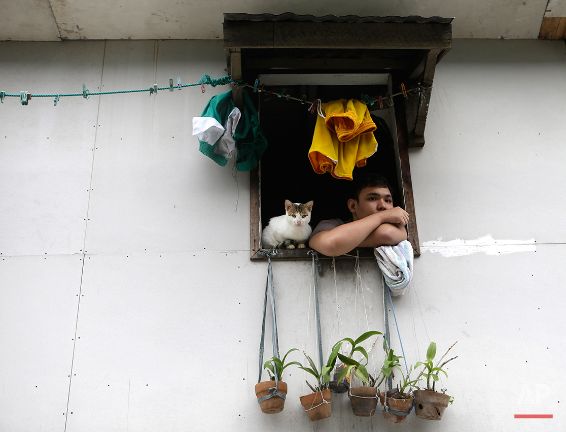 """A marooned resident peers from his upper floor window with his cat following flooding which was spawned by typhoon Sanba (local name """"Karen"""") Saturday Sept.15, 2012 at San Juan city, East of Manila, Philippines. The rains flooded low-lying areas of metropolitan Manila forcing the cancellation of classes and the evacuation of hundreds of residents in affected areas. (AP Photo/Bullit Marquez)"""