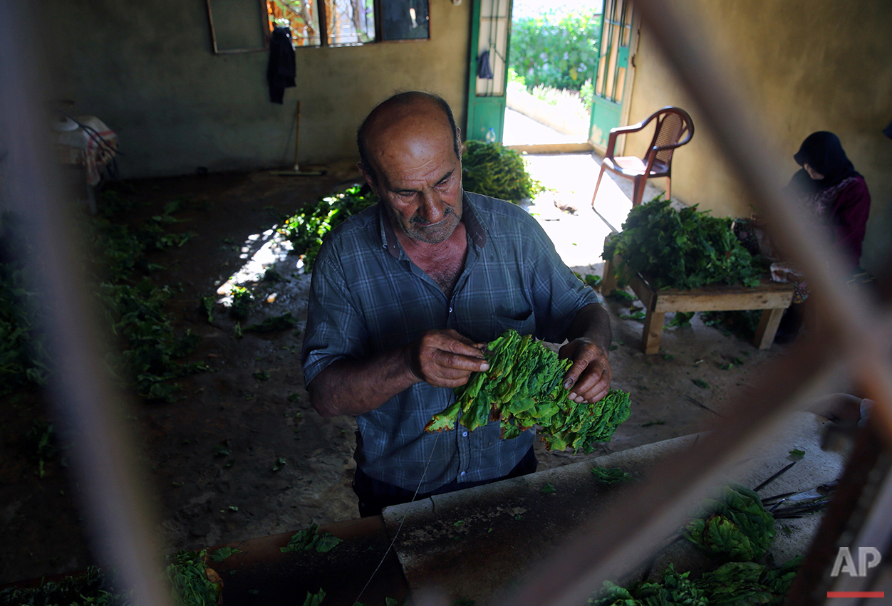 In this Thursday, Aug. 11, 2016, Lebanese abou Ali and his wife attach tobacco leaves to a thread and hang it on long wires to dry, at their field in the southern village of Adchit, Lebanon. Syria's conflict has flooded Lebanon with hundreds of thousands of refugees, put a huge strain on the economy and increased demand on the country's already crumbling infrastructure. But the Syrian five-year civil war has been a boon for at least one sector: the tobacco industry. (AP Photo/Bilal Hussein)