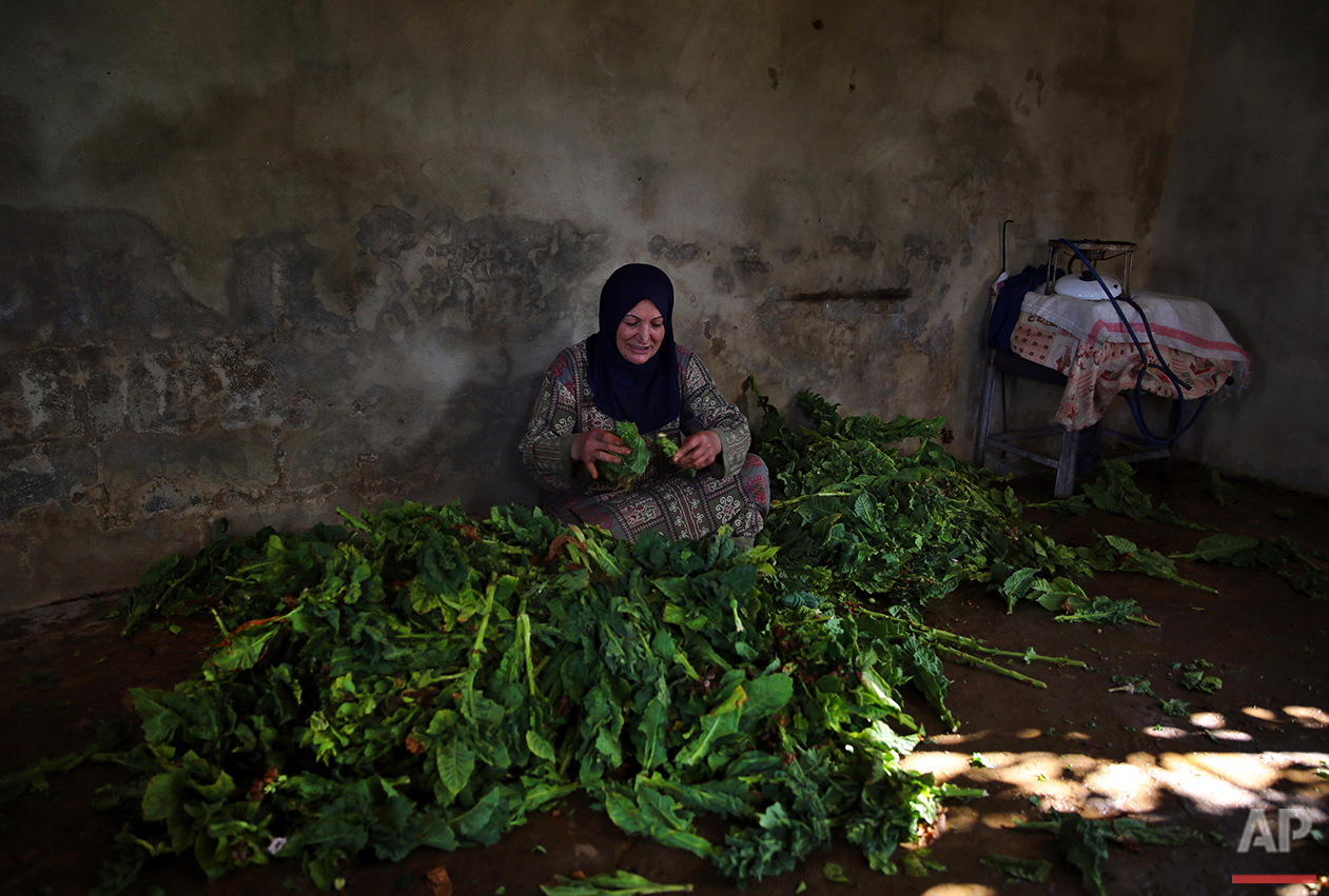 In this Thursday, Aug. 11, 2016 photo, Lebanese farmer Latifah Tarhini attaches tobacco leaves to a thread so they can be hung to dry, near her field in the southern village of Adchit, Lebanon. Syria's civil war has displaced over a million refugees to Lebanon, putting huge strain on the Lebanese economy, but it has been a boon for at least one sector: the tobacco industry. Lebanon's state-owned cigarette company is boosting production to meet rising demand, and is one of the few institutions to contribute money to the government coffers. (AP Photo/Bilal Hussein)
