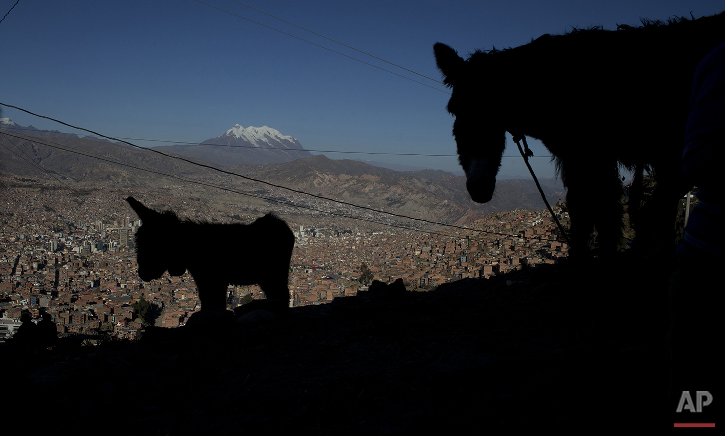 In this May 22, 2016 photo, a donkey, whose milk is sold by her owner, stands with her foal overlooking La Paz and the snow capped Illimani Mountain in El Alto, Bolivia. Elizabth Canipa, director of the maternal milk program with Bolivia's Health Ministry, said there is no scientific study proving that donkey milk has curative properties. (AP Photo/Juan Karita)