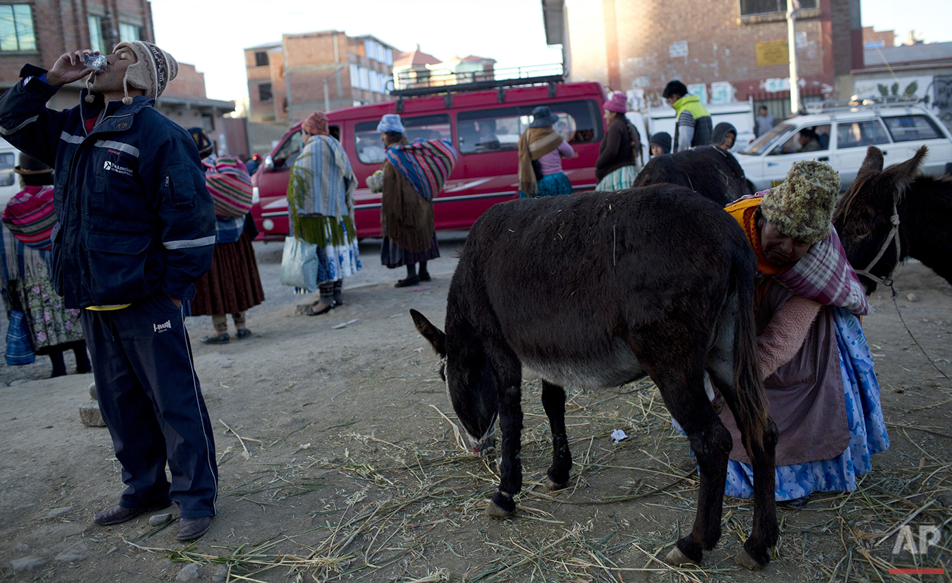 In this May 24, 2016 photo, a man drinks a shot of donkey milk as vendor Andrea Aruquipa continues to hand milk her donkey for clients in El Alto, Bolivia. Aymara women position their female donkeys every morning on a street corner in El Alto and milk them for clients lining up in the cold air. (AP Photo/Juan Karita)