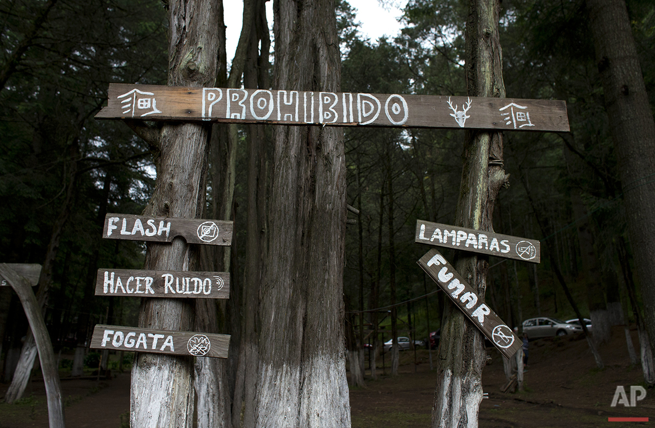 In this July 21, 2016 photo, rules to protect the firefly habitat and mating process are posted inside Piedra Canteada, near Nanacamilpa, Tlaxcala state, Mexico. Among the list of banned activities are the use of camera flash or flashlights, smoking, making noise, or lighting campfires. To avoid interfering with the fireflies mating process, in which they communicate through their light patterns, power in the camp is shut off for two hours during the peak nighttime appearance of the fireflies, and cars are prohibited from entering or exiting. Certified guides lead groups of silent tourists along dark forest paths to get the best view of the fireflies. (AP Photo/Rebecca Blackwell)