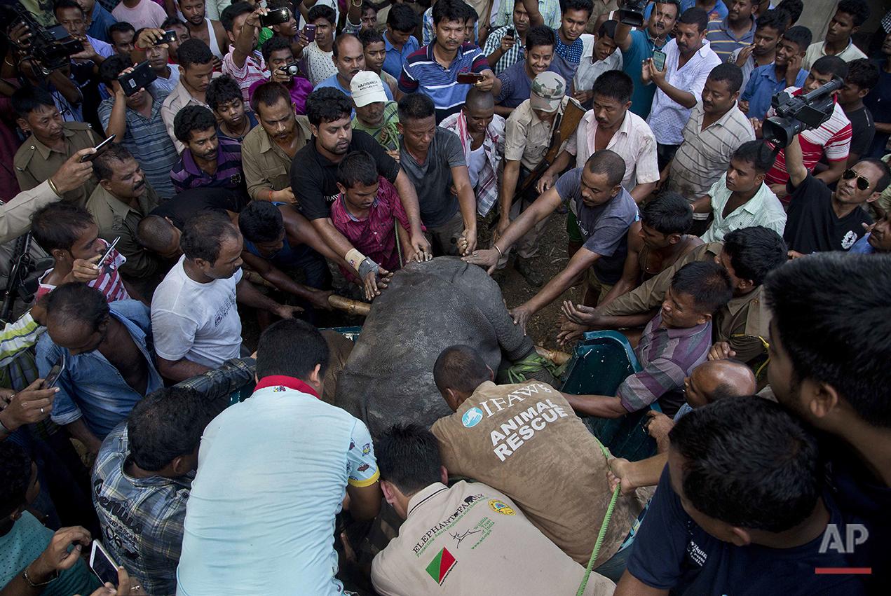 India Floods Rhino Rescue