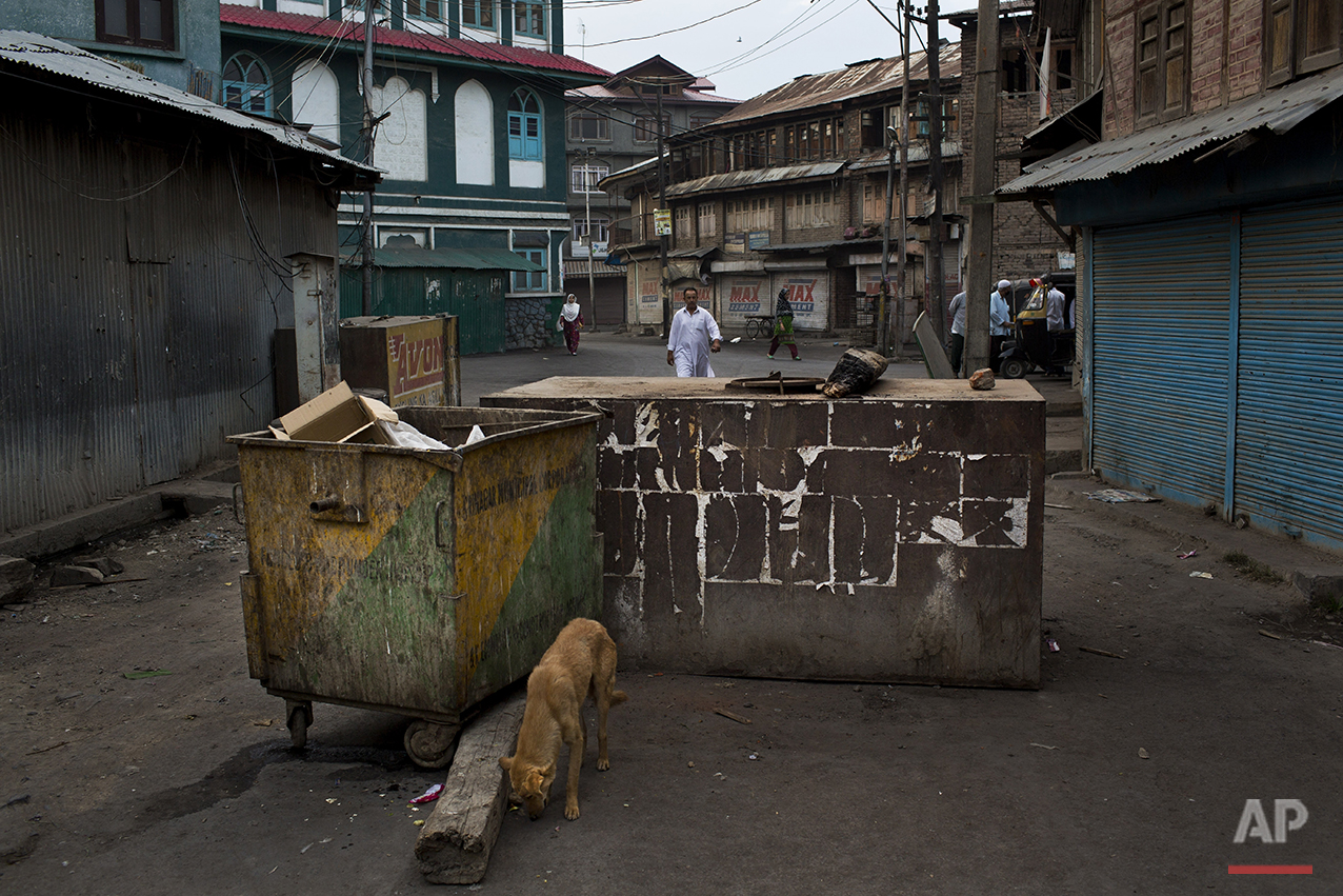In this July 24, 2016 photo, a dog searches for food near rusted dumpsters used as barricades in Srinagar, India-controlled Kashmir. (AP Photo/Bernat Armangue)