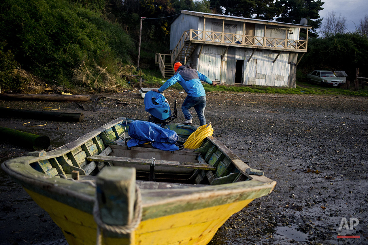 "In this May 11, 2016 photo Jose Luis Cifuentes jumps out of his boat after removing water that had gathered inside his boat in the fishing village Quetalmahue, in Chiloe Island, Chile, during the country's worst ever ""red tide"" environmental disaster. (AP Photo/Esteban Felix)"