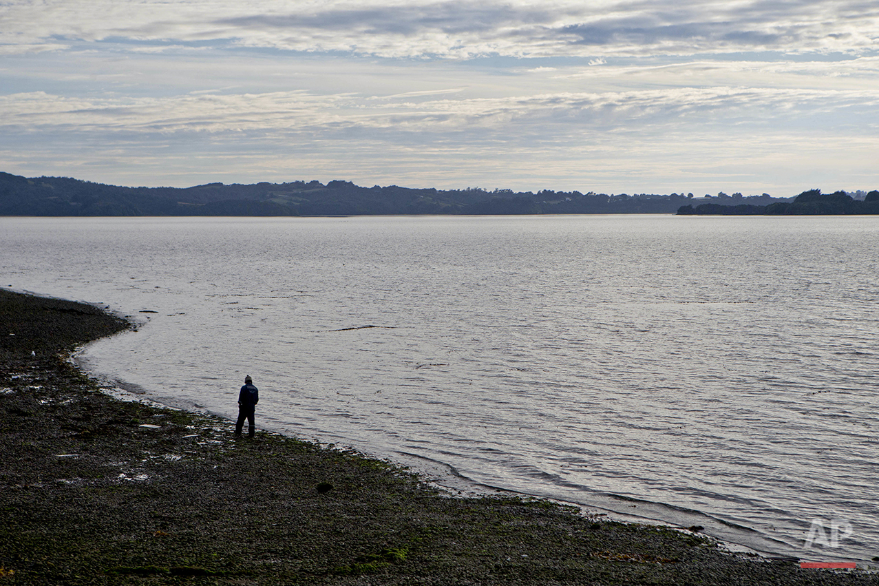 "In this May 10, 2016 photo, a fisherman walks on the shore of the fishing village Quetalmahue in Chile's Chiloe island, Chile, during the country's worst ever ""red tide"" environmental disaster. This string of islands off Chile's coast was once best known for its dramatic landscapes, rich wildlife, quaint stilt homes and colonial-era churches. But today, it is getting attention for something far less picturesque, a toxic algal bloom that is threatening its marine life and the livelihoods of the fishermen who depend on it. (AP Photo/Esteban Felix)"