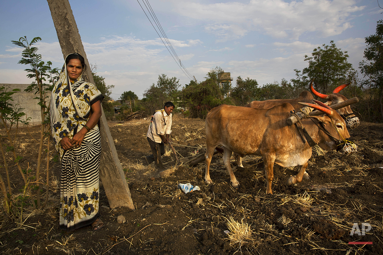 "In this May 10, 2016, photo, Nita Balasaheb Jadav stands by as her husband Bala Sahib Jadav ploughs his field in anticipation of good monsoon rains on the outskirts of Latur in the Indian state of Maharashtra. Many trains pull into Latur's railroad station but none is as eagerly awaited as this train that pulls into the parched town in the dead of the night. That train called ""Jaldoot"" or the Messenger of Water brings millions of liters of the precious liquid that the drought-plagued central Indian district so desperately needs. (AP Photo/Manish Swarup)"