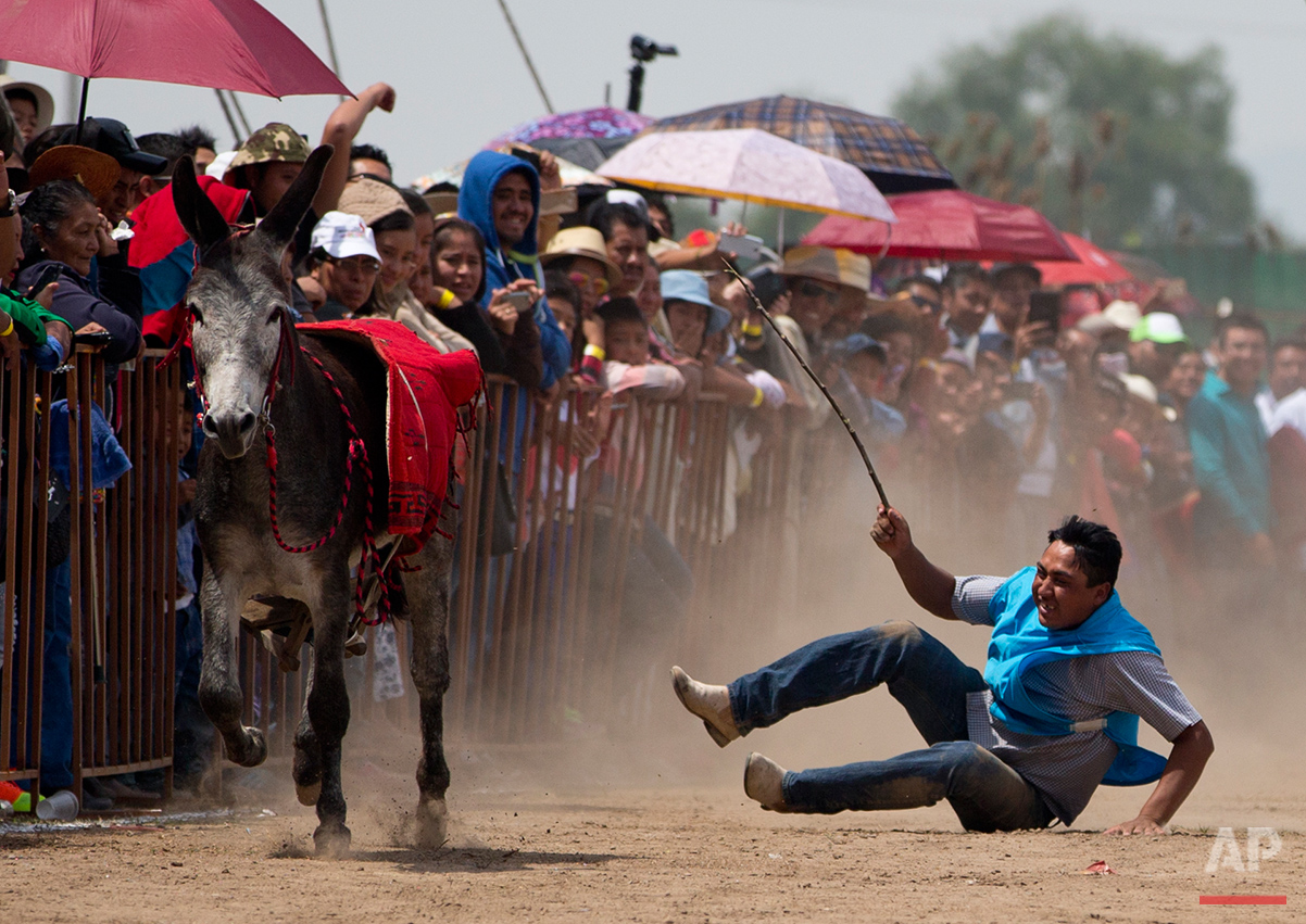 APTOPIX Mexico Donkey Fair Photo Gallery