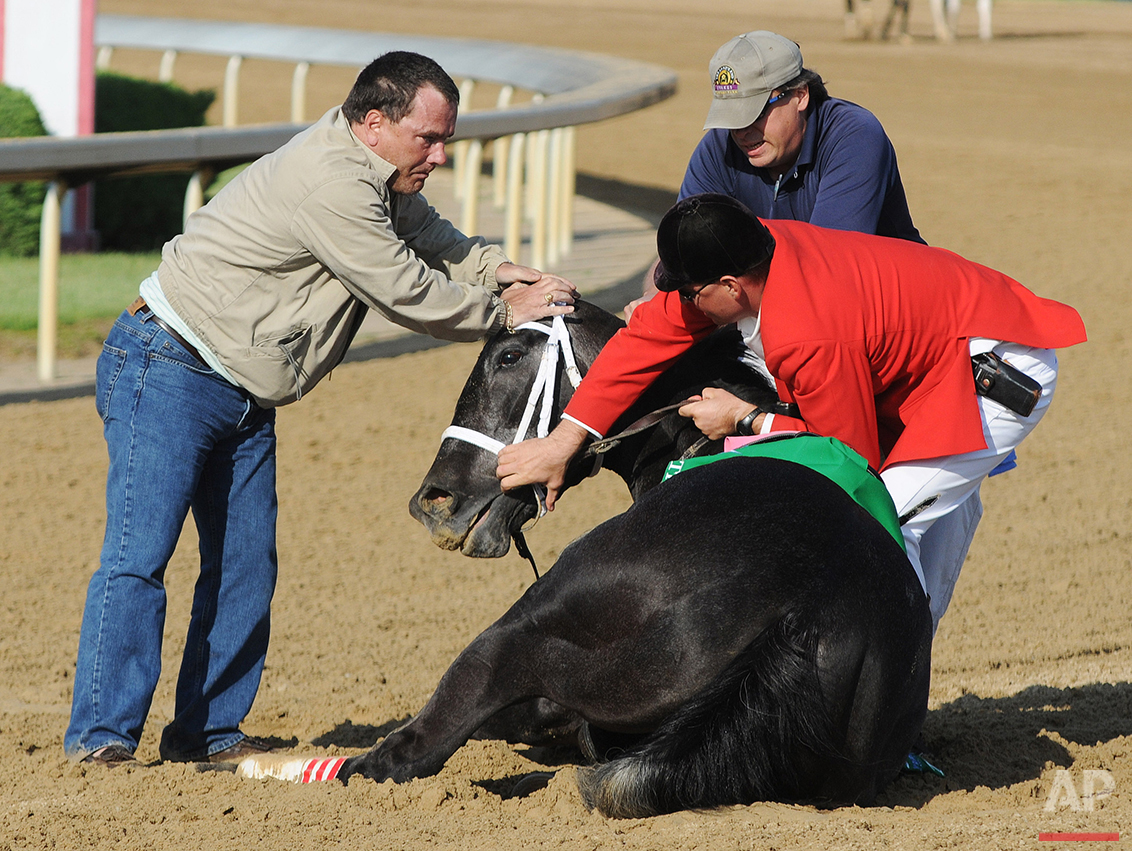 In this May 3, 2008 photo, track personnel try to hold down Eight Belles after the 134th Kentucky Derby at Churchill Downs in Louisville, Ky. Eight Belles was euthanized after breaking both front ankles following a second-place finish in the Kentucky Derby. (AP Photo/Brian Bohannon/FILE )