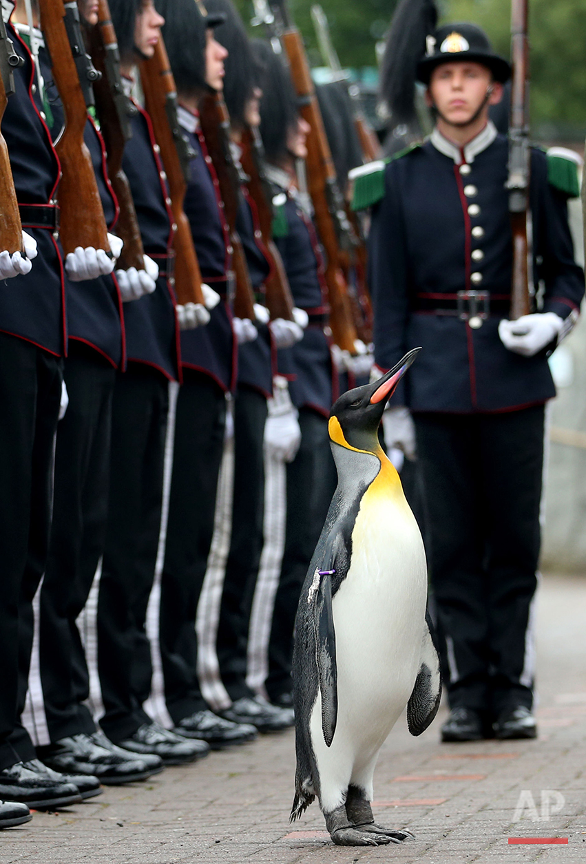 Britain Penguin