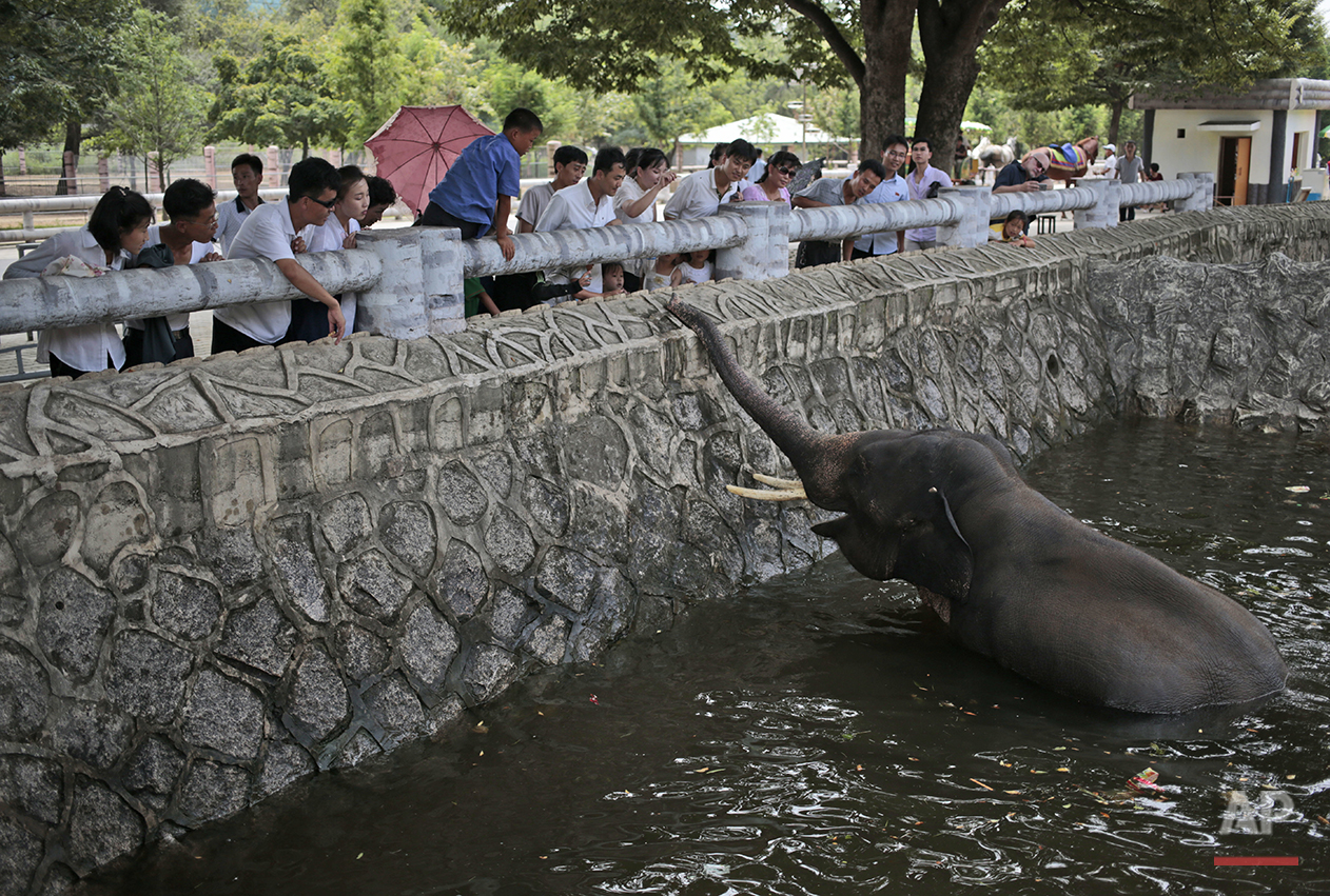 North Koreans feed an elephant at the newly opened Pyongyang Central Zoo in Pyongyang, North Korea, Tuesday, Aug. 23, 2016. North Korean leader Kim Jong Un's latest gift to the lucky residents of Pyongyang, the renovated central zoo, is pulling in thousands of visitors a day with a slew of attractions ranging from such typical zoo fare as elephants, giraffes, penguins and monkeys to a high-tech natural history museum. (AP Photo/Dita Alangkara)