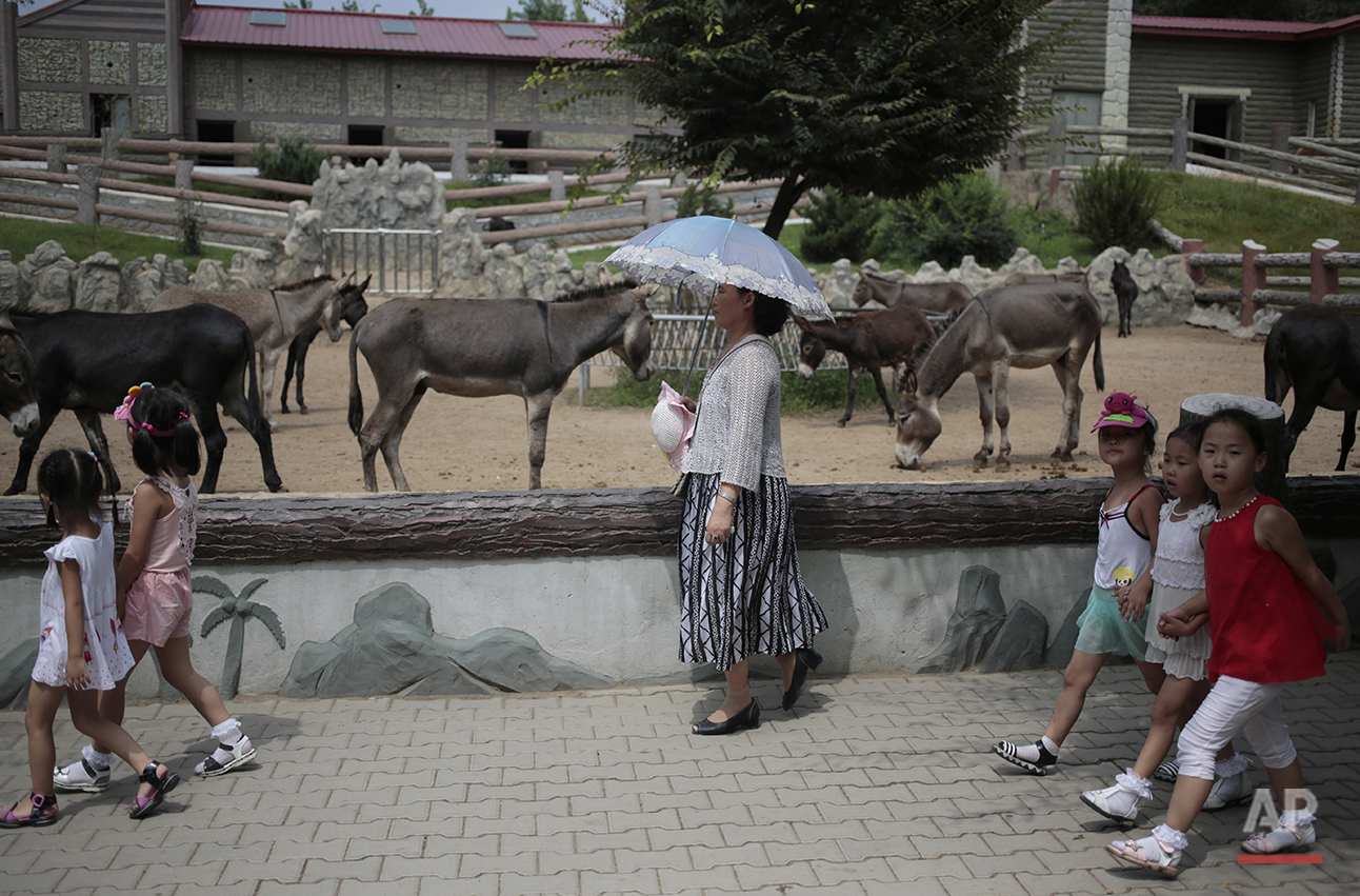 A North Korean woman walks past by a donkey pen at the newly opened Pyongyang Central Zoo in Pyongyang, North Korea, Tuesday, Aug. 23, 2016. North Korean leader Kim Jong Un's latest gift to the lucky residents of Pyongyang, the renovated central zoo, is pulling in thousands of visitors a day with a slew of attractions ranging from such typical zoo fare as elephants, giraffes, penguins and monkeys to a high-tech natural history museum. (AP Photo/Dita Alangkara)