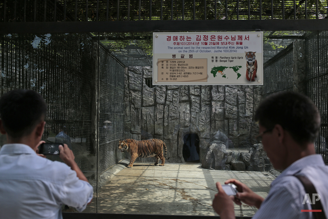 North Korean men take pictures of a tiger at the newly opened Central Zoo in Pyongyang, North Korea, Tuesday, Aug. 23, 2016. North Korean leader Kim Jong Un's latest gift to the lucky residents of Pyongyang, the renovated central zoo, is pulling in thousands of visitors a day with a slew of attractions ranging from such typical zoo fare as elephants, giraffes, penguins and monkeys to a high-tech natural history museum. (AP Photo/Dita Alangkara)See these photos on  APImages.com