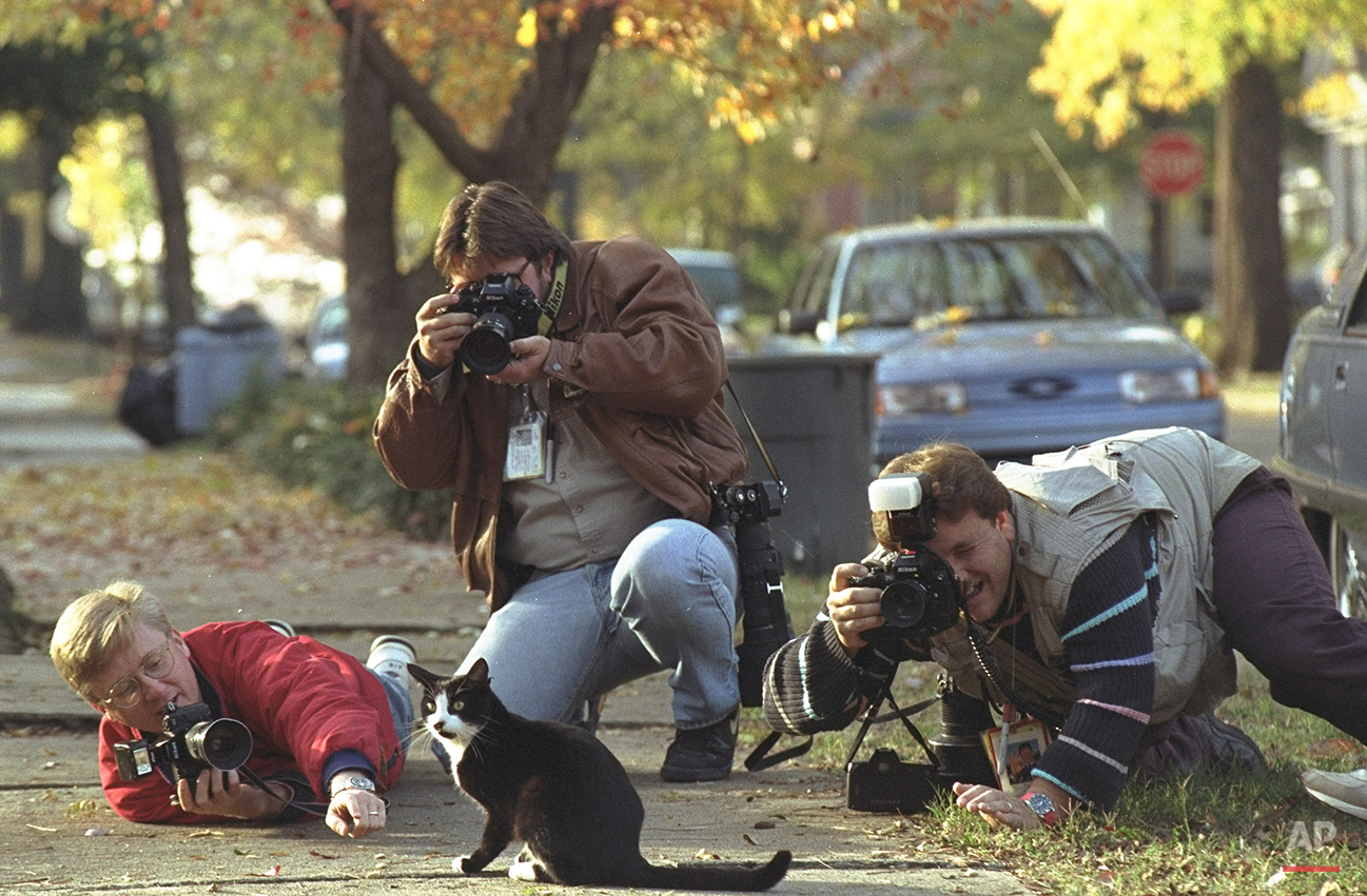 """Chelsea Clinton's cat """"Socks"""" gets the attention of photographers on the sidewalk outside the fenced Arkansas Governor's Mansion in Little Rock Tuesday.  """"Socks"""" strolled about a two block area with photographers in tow.  President-elect Clinton is working on his transition and preparing for a trip to Washington and a meeting with President Bush.  (AP Photo/Greg Gibson)"""