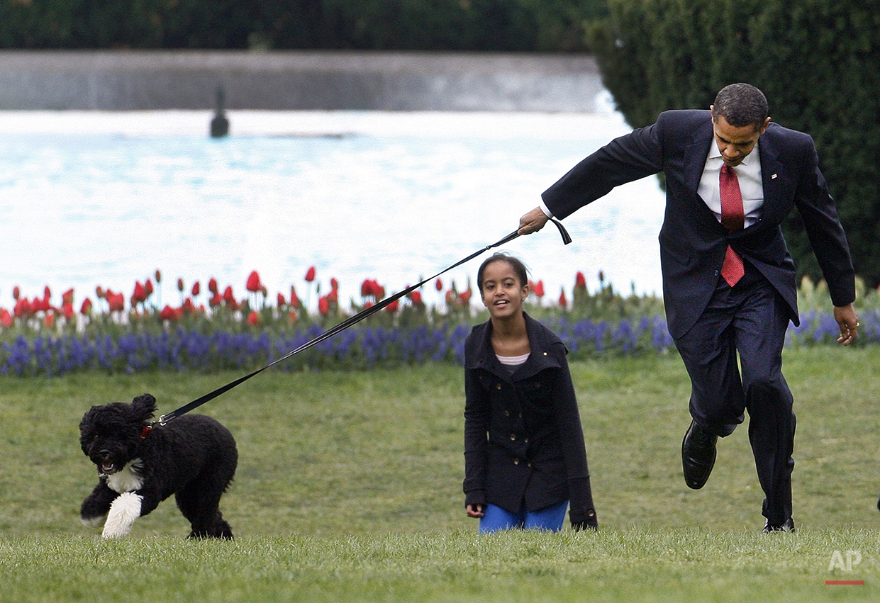 President Barack Obama is pulled as he shows off their new dog Bo, in this April 14, 2009 photo, on the South Lawn of the White House in Washington, as daughter Malia follows. (AP Photo/Ron Edmonds)