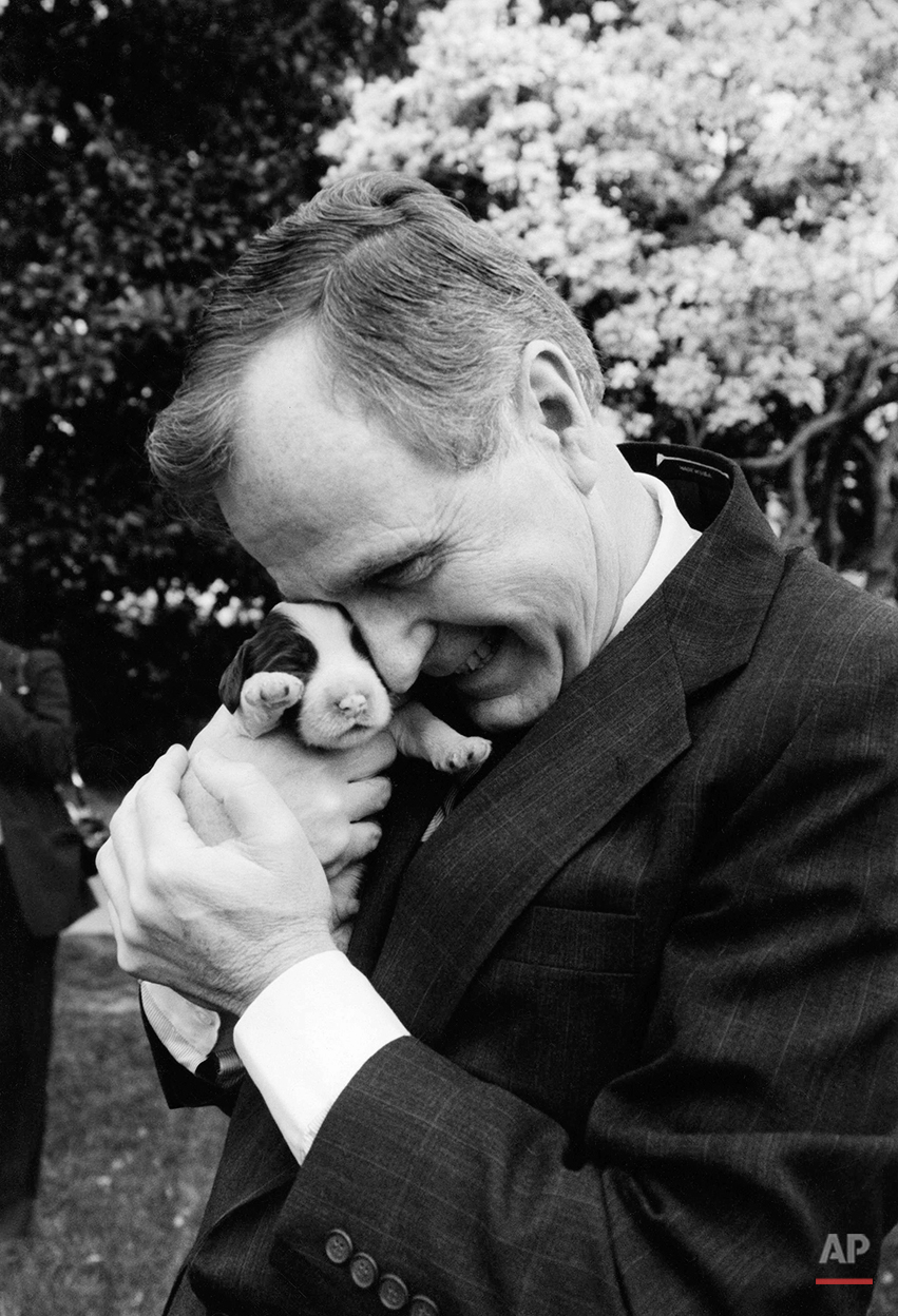 President  George H.W. Bush  holds one of first dog Millie's six puppies for the press on Wednesday, March 29, 1989 at the White House in Washington.  Mother dog Millie gave birth March 27, 1989 with First Lady Barbara Bush serving as midwife according to spokeswomen. (AP Photo/Ron Edmonds)