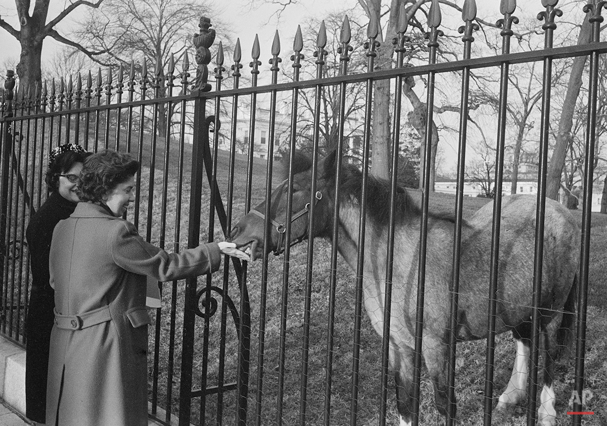 Caroline Kennedy's pet horse Macaroni pauses from grazing on the White House lawn to take some sugar from Helen Milson, a government employee, March 15, 1962. (AP Photo/Bob Schutz)