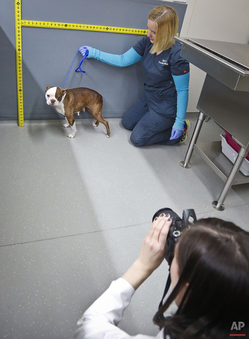 Forensic Veterinarians