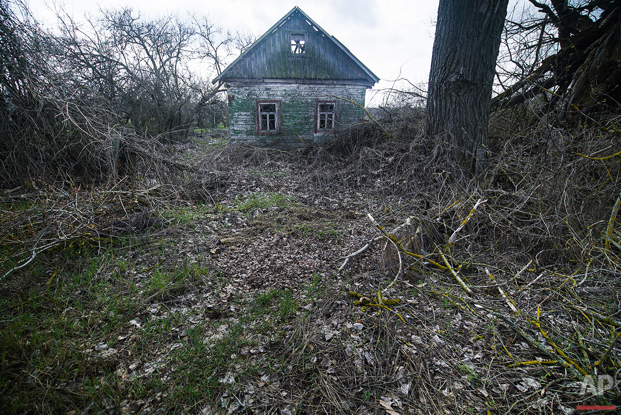 In this photo taken on Thursday, April  7, 2016,  an abandoned house is seen in Karpylivka, Ukraine. Karpylivka is one of the nearest villages to the destroyed reactor of the Chernobyl plant and has very few inhabitants. (AP Photo/Mstyslav Chernov)