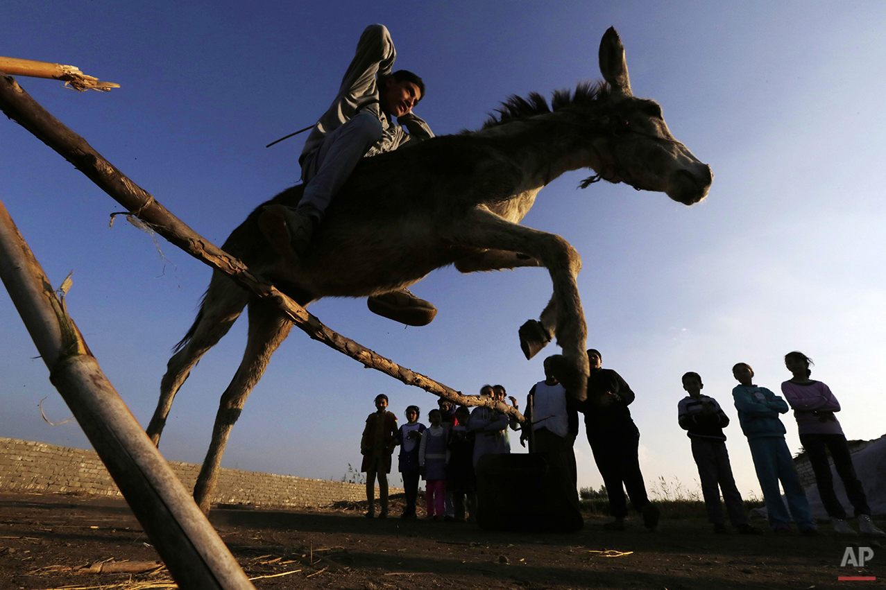 Mideast Egypt Jumping Donkey Photo Gallery