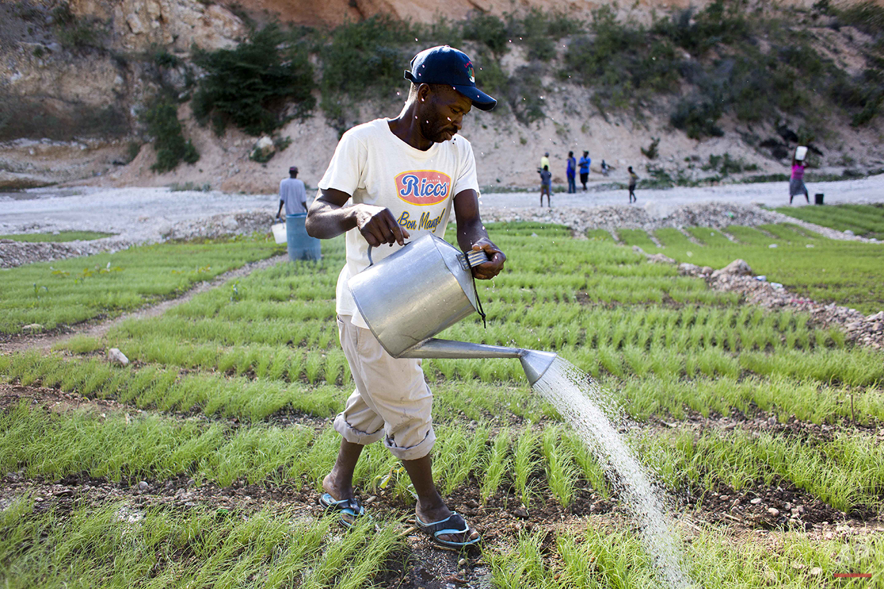 In this Feb. 15, 2016 photo, a man waters his onion garden in Fonds Verrettes, Haiti. For the last three years, a punishing drought has driven Haitians who were already barely getting by on marginal farmland even deeper into misery. Officials say more rural families are being forced to join the decades-long exodus to cities. (AP Photo/Dieu Nalio Chery)