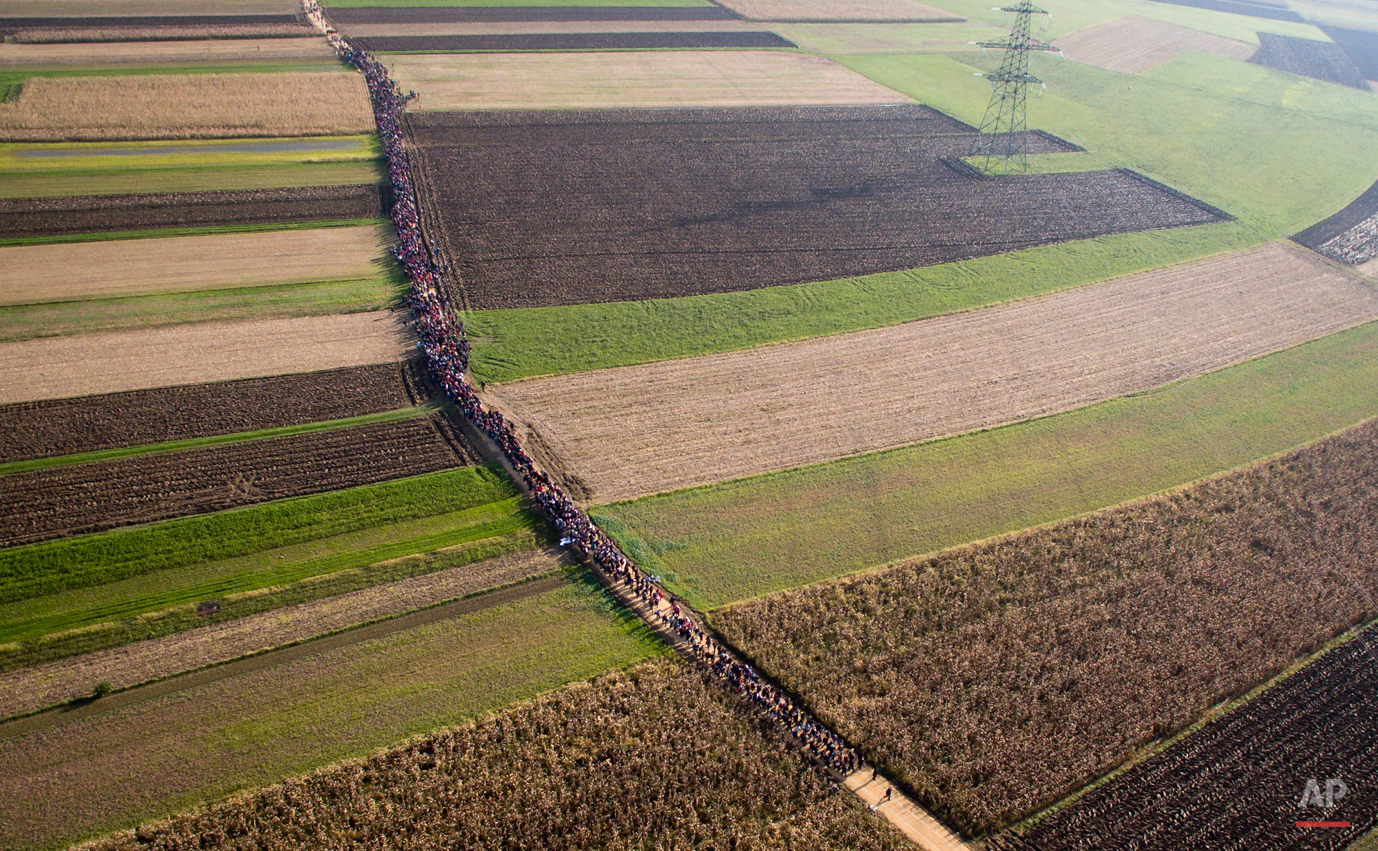 In this aerial photo, a column of migrants moves through fields after crossing from Croatia, in Rigonce, Slovenia, Sunday, Oct. 25, 2015. Thousands of people are trying to reach central and northern Europe via the Balkans, but often have to wait for days in mud and rain at the Serbian, Croatian and Slovenian borders. (AP Photo/Darko Bandic)