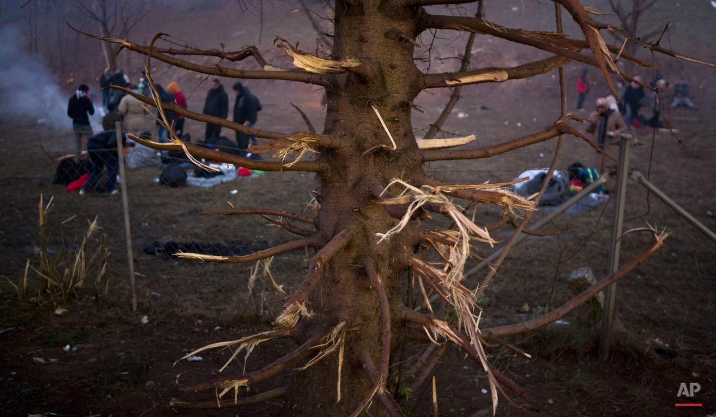 In this photo made on Thursday, Nov. 5, 2015, migrants prepare to spend a night in the open air, near a tree whose branches were cut for firewood, in Sentilj, Slovenia, near the border with Austria. (AP Photo/Darko Bandic)