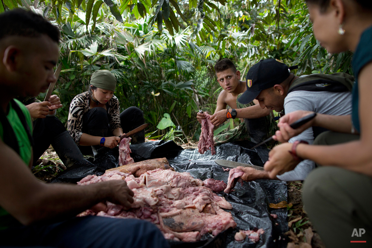 In this Jan. 4, 2016 photo, rebel soldiers of the 36th Front of the Revolutionary Armed Forces of Colombia or FARC, work together to flay the skin of a hog carcass, near their hidden camp in Antioquia state, in the northwest Andes of Colombia. Many of the FARCís roughly 7,000 fighters come from the most-modest of campesino upbringings and struggle to imagine themselves outside regimented camp life. (AP Photo/Rodrigo Abd)