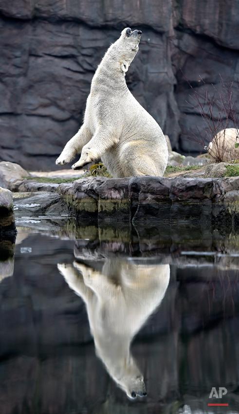 Germany Weather Zoo