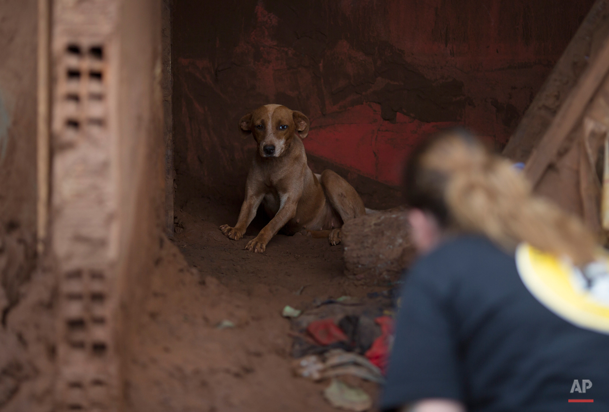 In this Nov. 24, 2015 photo, Danielle Savy, member of the animal protection group Forca Animal, works to coax a dog out of a mudslide damaged home, in Paracatu, Brazil. After obliterating the town, the tide of mud and debris surged forward, blanketing a wide swath of land and cascading into the Doce River, leaving behind the dazed survivors. (AP Photo/Leo Correa)